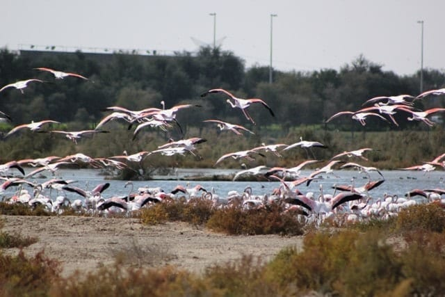 birds taking off from wetlands, sustainable guide to Dubai