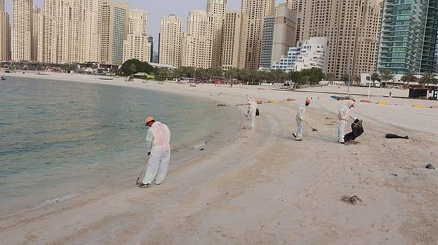 News 0002 بلدية دبي جهود عمال النظافة