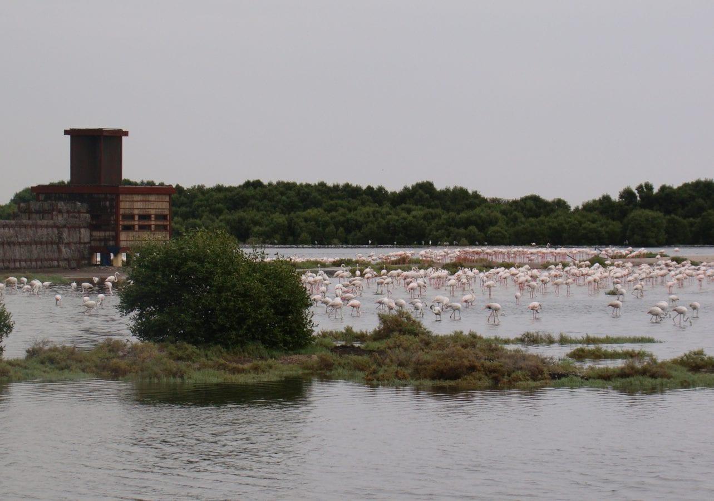 2. Flamingo hide